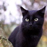 Son chat disparait en Allemagne : 1 an plus tard, un appel de France la fait fondre en sanglots