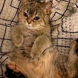 Marion Cotillard et Guillaume Canet ont perdu leur chat : ils donnent leur numéro de portable pour le retrouver