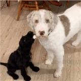 Ils adoptent un 2e chien : leur toutou a une réaction qu'ils n'oublieront jamais !