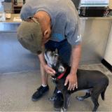 Expulsé de son logement, il emmène son chien au refuge : un miracle se produit !