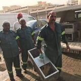 """""""Des milliers de chats sacrifiés"""" : à Dubaï, nourrir les chats errants est désormais puni par la loi"""