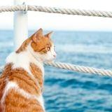 Un chat secouru après avoir passé 7 mois en mer sur une chaloupe