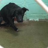 Totalement déprimée, cette chienne fixait le mur du refuge sans bouger jusqu'à ce que l'incroyable se produise