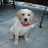 Un homme s'approche d'un chien laissé seul près d'un stand : sa réaction laisse bouche bée