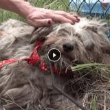 La métamorphose d'un chien errant qui n'avait jamais été caressé (Vidéo du jour)