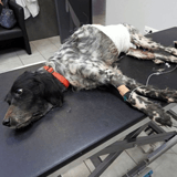 """""""Elle était en train de pourrir"""" : elle tente de sauver une chienne, 10 jours après les mots du vétérinaire la bouleversent"""