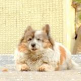 Pendant 10 ans, ils croisent le même chien au même endroit : la raison est bouleversante