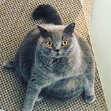 Ce chat énorme est menacé d'euthanasie, mais le vétérinaire fait une incroyable découverte !