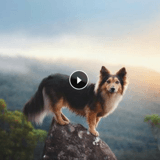 Mr Fox, le plus beau chien d'Instagram ?