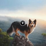 Mr Fox, le plus beau chien d'Instagram ? (Vidéo du jour)