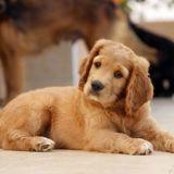 Cette étude prouve que votre chien ne comprend (presque) rien à ce que vous lui dites !