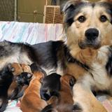 Une chienne et ses 9 chiots retrouvés enfermés dans une boite dans une décharge à ordures
