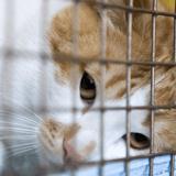 Départ en vacances à l'aéroport : son chat se fait écraser lors de l'embarquement