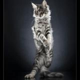 STANDING CATS, une galerie de portraits qui fait miaou !
