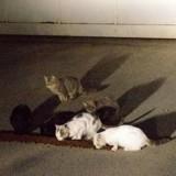 Gard : Qui empoisonne les chats sur le parking d'un supermarché ?