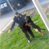 Il voit un policier avec son chien, et sort sa caméra tant il est choqué par ce qui se passe !