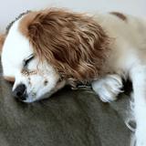 On lui annonce que son chien est mort, tout à coup elle entend un étrange hurlement