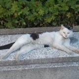 Olive, le chat du ministère de l'Économie et des Finances est décédé : Bruno Le Maire lui rend hommage