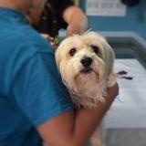 Des milliers de vétérinaires se portent volontaires pour prêter main forte aux médecins