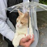 Ce chat se promenant sous la pluie avec son mini-parapluie attire tous les regards des passants !