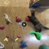 Un chaton devient le roi de l'escalade dans une salle de sport (Vidéo du jour)