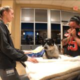 Abandonné et blessé, ce chien porte un collier sur lequel est inscrit un message terrifiant