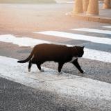 7 ans après avoir perdu leur chat, un couple reçoit un appel qui va les bouleverser