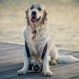 Grand concours photo national : faites de vos animaux des stars et luttez contre l'abandon !