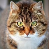 Le comportement suspect de cette maman chat a permis de faire une surprenante découverte