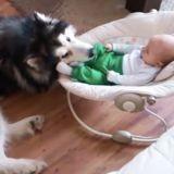 Le bébé donne un coup de pied au chien, sa réaction a de quoi faire frémir !