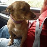 Jeté sur l'autoroute par son maître, ce chien a essayé de le suivre jusqu'à ce que ses pattes ne le portent plus (Vidéo)