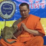 Ce moine bouddhiste étouffe un fou rire en pleine prière à cause d'un chat