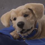 CES 2020 : Découvrez Jennie, l'adorable robot-chien de compagnie plus vrai que nature