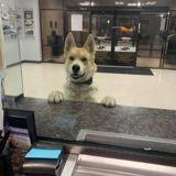 Un chien débarque dans le commissariat : les agents sont choqués quand la vérité éclate !