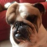Ce chien se réveille avec un œdème énorme à l'oeil, le vétérinaire est choqué lors du diagnostic
