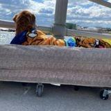 Ils fabriquent un lit mobile pour emmener leur vieux chien à la plage