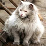 De nombreux chatons jetés à la poubelle cet été