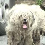 Il suit un chien dans un état catastrophique jusqu'à une maison et y fait une découverte qui donne la nausée
