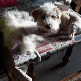 Votre animal perd ses poils ? Cette entreprise française vous propose d'en faire des vêtements !