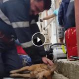 Un pompier héroïque fait du bouche-à-bouche à un chien pour lui sauver la vie