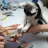 Elle fait une manucure à une cliente : tout d'un coup, son chat attrape la lime et laisse tout le monde sans voix