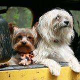Les policiers découvrent des chiens entassés dans un camion : le vétérinaire fait une terrible découverte