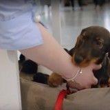 """Ouvrez les portes de votre entreprise aux chiens avec """"l'Alliance Pets at Work"""" !"""