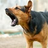En Suisse, il est interdit d'empêcher son chien d'aboyer
