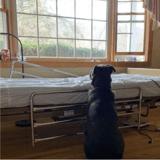 Ce chien attend son maître décédé : la photo fait pleurer le monde entier et un miracle se produit