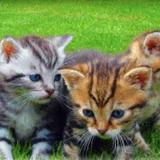 Mon Animal TV, la nouvelle chaîne dédiée aux animaux