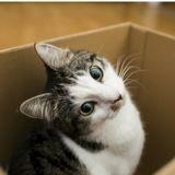 Pourquoi les boîtes font-elles un carton auprès des chats?