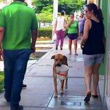 Il marche dans la rue et croise un chien : ce qu'il tient dans sa gueule lui met les larmes aux yeux