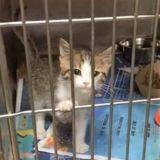 Le chaton se met à miauler dans le refuge : tout le monde est choqué en entendant le son qui sort de sa bouche !