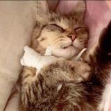 Sur TikTok, cette chatte en deuil se réconfortant dans les bras de sa poupée chaton émeut la toile